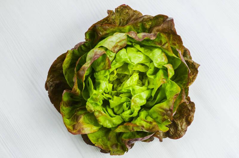 7 Salatsorten: Batavia