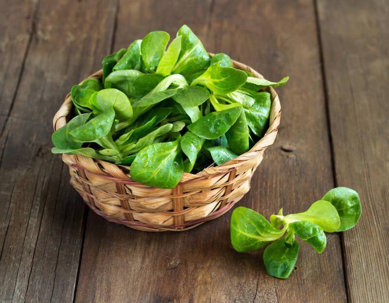 7 Salatsorten: Feldsalat