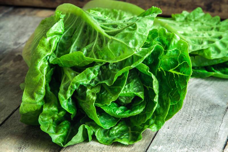 7 Salatsorten: Romanosalat