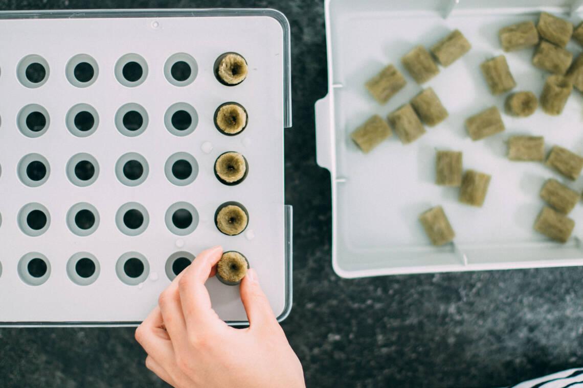Wir testen: Gemüseanbau mit Hydrokultur - das Anzüchten