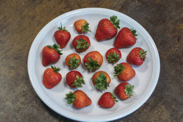Einfrieren: Erdbeeren auf Teller