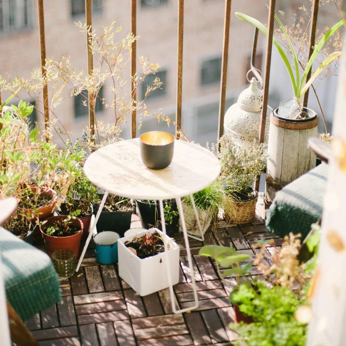 Gemüse Auf Dem Balkon Anbauen Tipps Sevencooks