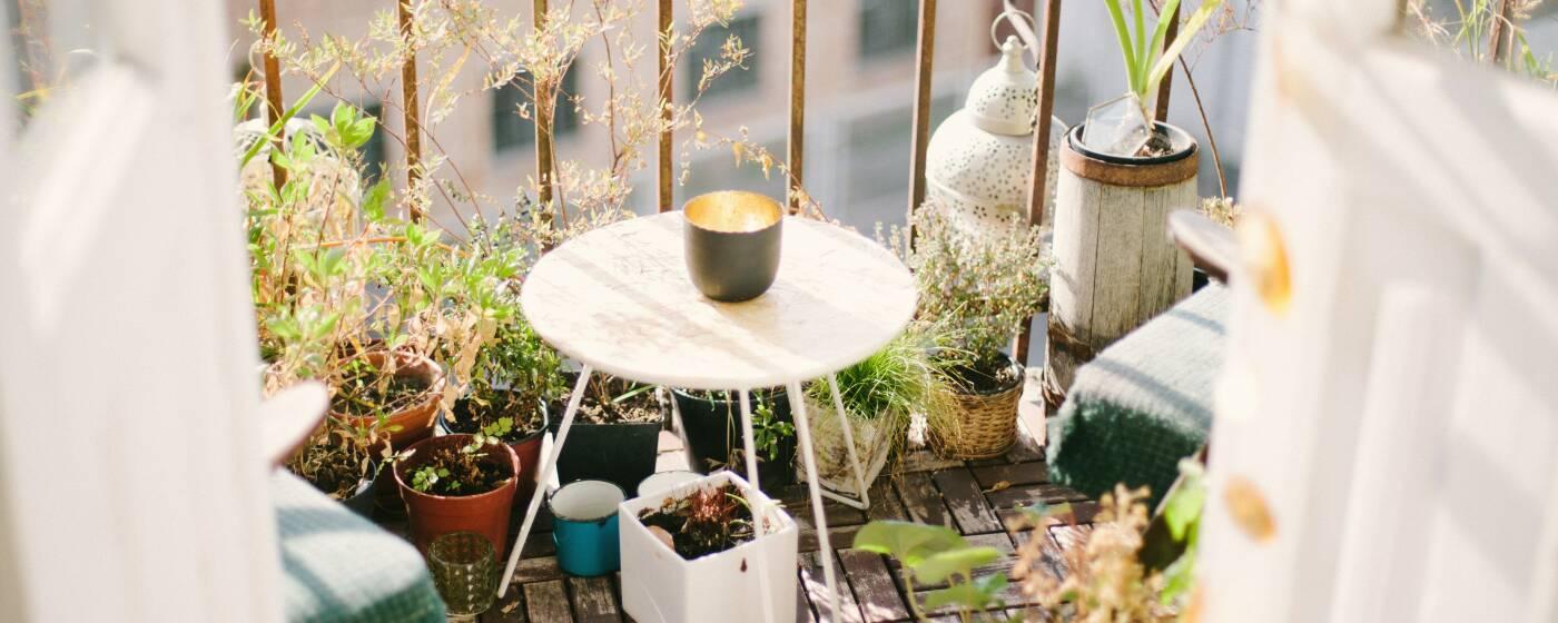 Gemüseanbau auf dem Balkon: Kräuter und Pflanzen in kleinen Töpfchen