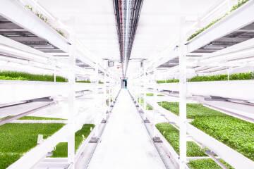 Growing Underground London Indoor Farm