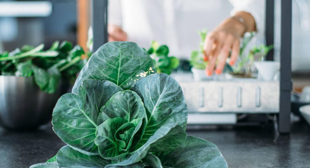 Salatanbau im b ro mit ikeas v xer die ernte sevencooks for Hydrokultur zuhause