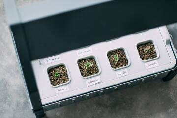 Hydrokultur Umpflanzen Headerbild
