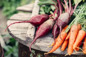 Karotten und Rüben