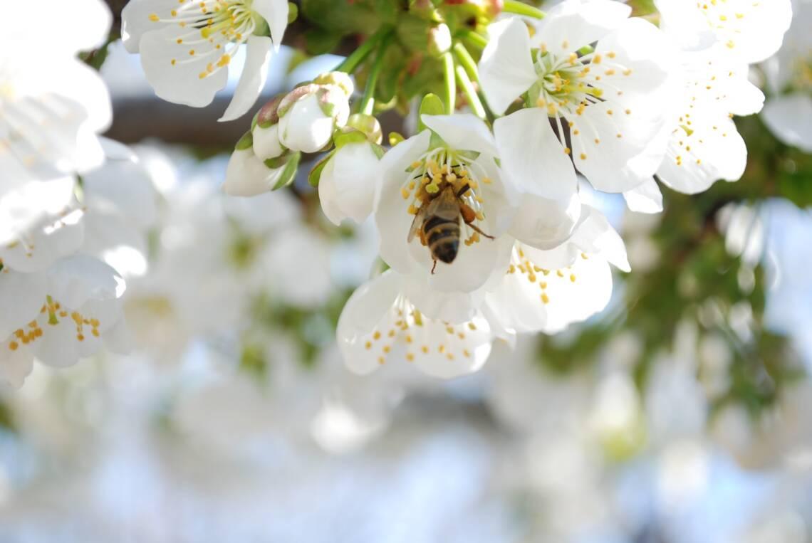 Bienensterben: Das kannst du dagegen tun