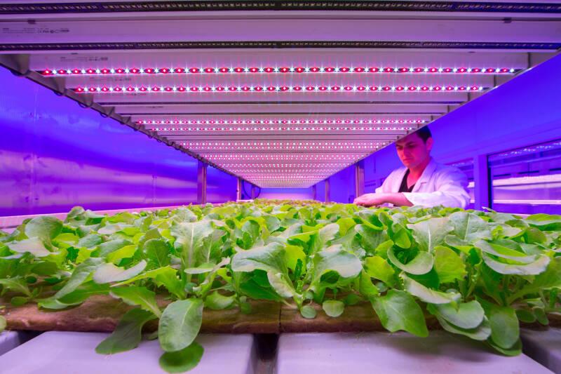 Philips-CityFarm-Indoor Farm