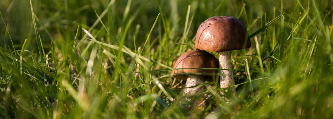Pilze sammeln – Das musst du darüber wissen