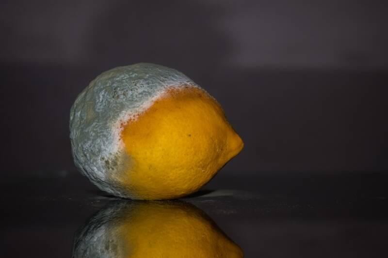 Schimmelnde Zitrone