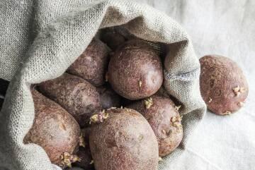 Treibende Kartoffeln
