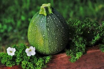 Zucchini Rondini 2