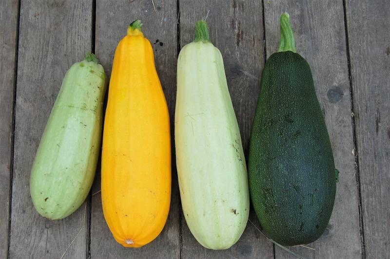 Zucchini Vielfalt 2
